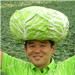 Ono_profile